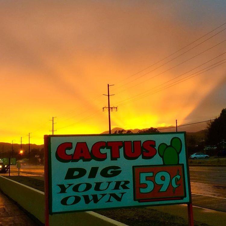 Cactus Mart - Instagram @cactus _mart