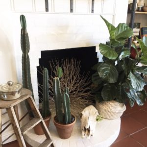 The fireplace display in Thick as Thieves complete with cacti and a bovine scull
