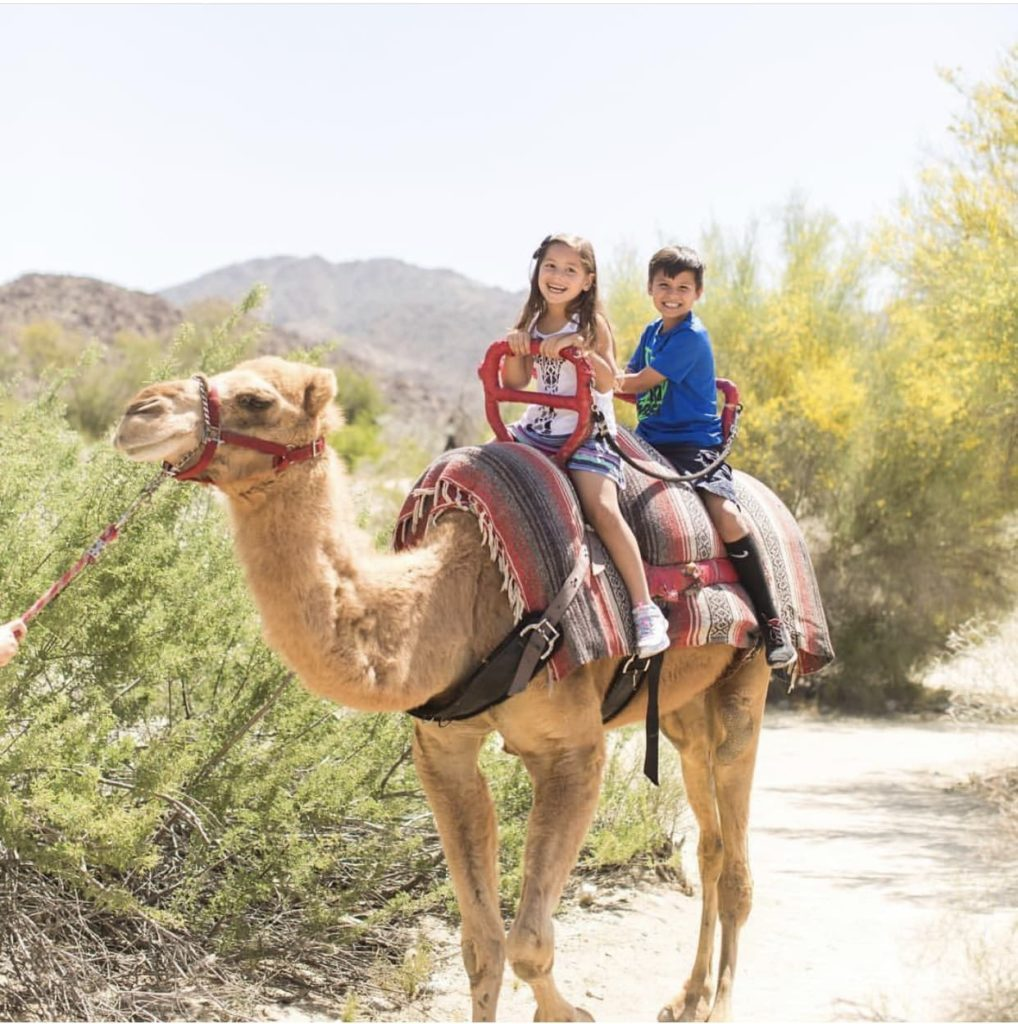 Two children riding on camel at the Living Desert